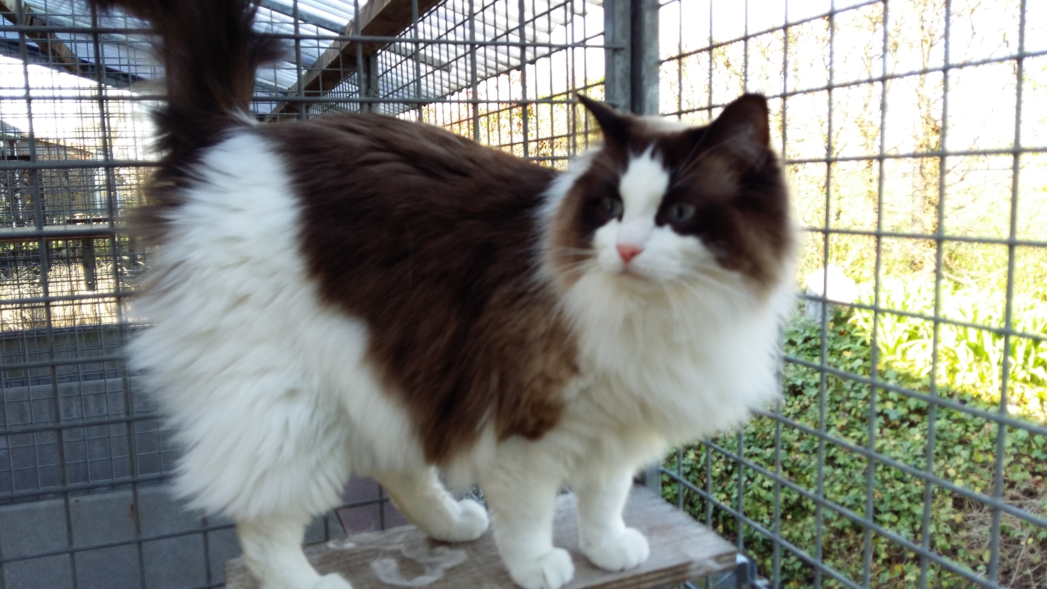 Silly's Cats And Dogs -  Herk-De-Stad - Home